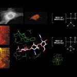 Dia Moleküle/Leben